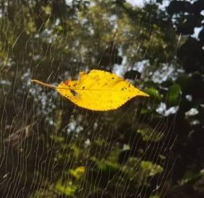[포토에세이] 거미줄에 걸린 가을 / 강창광