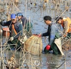 [카메라 뉴스] 가물치까지 잡아들이는 전통 어업유산 가래치기