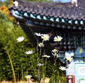 [포토친구] 가을꽃 가득한 팔공산 부인사