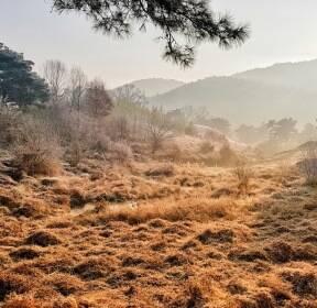 [포토친구] 안개 낀 아침 풍경