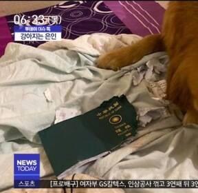 [이슈톡] 우한 여행 막은 기특한 '강아지' 화제