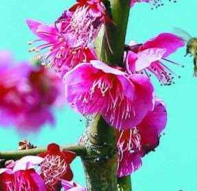 [한 컷] 그래도 봄은 옵니다