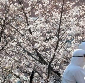 '봄은 왔지만, 계속되는 코로나19'
