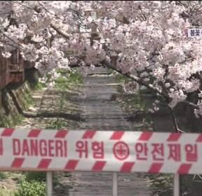 [뉴스 따라잡기] 봄꽃 축제 줄줄이 취소..현장은 지금?