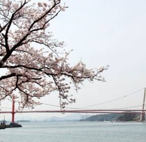[포토친구] 남해설천로 벚꽃