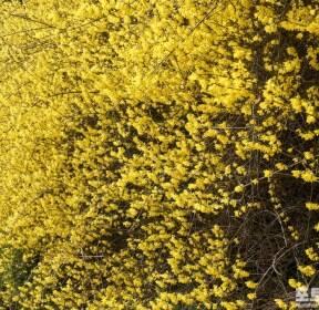 [포토친구] 고속도로변에서 봄을 봄