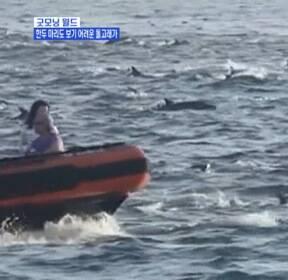 [굿모닝월드] 한두 마리도 보기 어려운 돌고래가