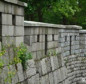 [포토친구] 성벽 돌 틈에 핀 작은 생명