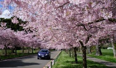 흩날리는 벚꽃 잎이~♪ 이제 정말 봄! 봄철 차량관리 방법 5