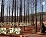 오늘도 걷는다.. 시간이 멈춘 원시숲의 따뜻한 품을 향해