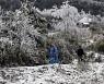 '눈이 펄펄 내렸습니다, 베트남에'..이례적 저온에 농업 피해·가축 폐사
