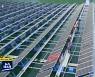 [집중취재M] 태양광 건설 '신기록'..많이 짓기만 하면 그만?