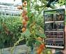 '스마트'·'친환경' 농업이 대세..올해 지역별 주요 농업 정책 살펴보니