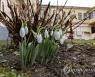 HUNGARY WEATHER SNOWDROP