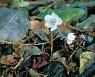 버선발로 달려나온 봄.. 저 꽃잎에 반해 이렇게 설렜나