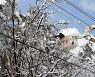 한전, 강원 영동·산간 폭설 정전 피해 99% 복구