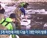 전북 3개 하천에 어린 다슬기 78만 마리 방류