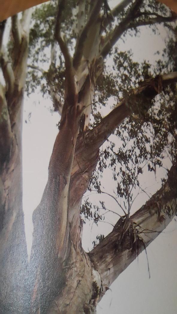 모두가 기댈 수 있는 나무♡♡