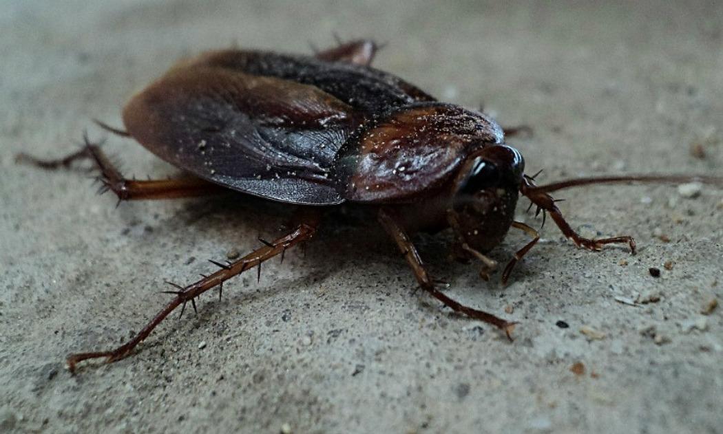 무서운건 아닌데 그냥 넌 이유없이 그냥싫어!! 새벽의 바퀴벌레와 사투