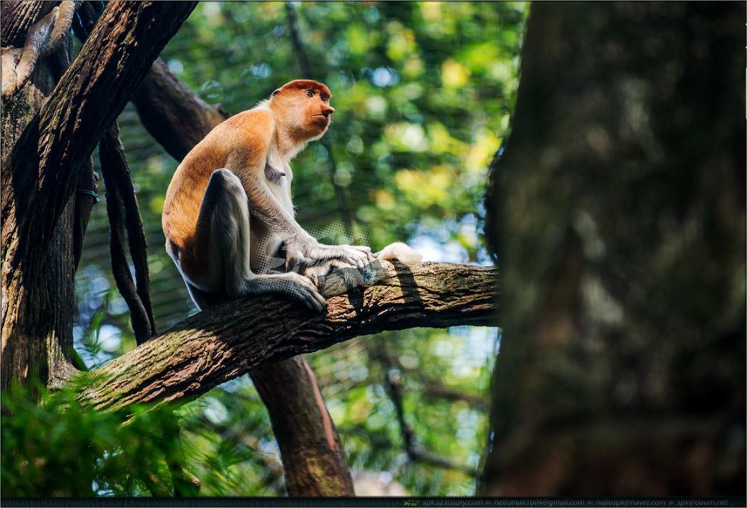 싱가포르 동물원에서 만난... (4)