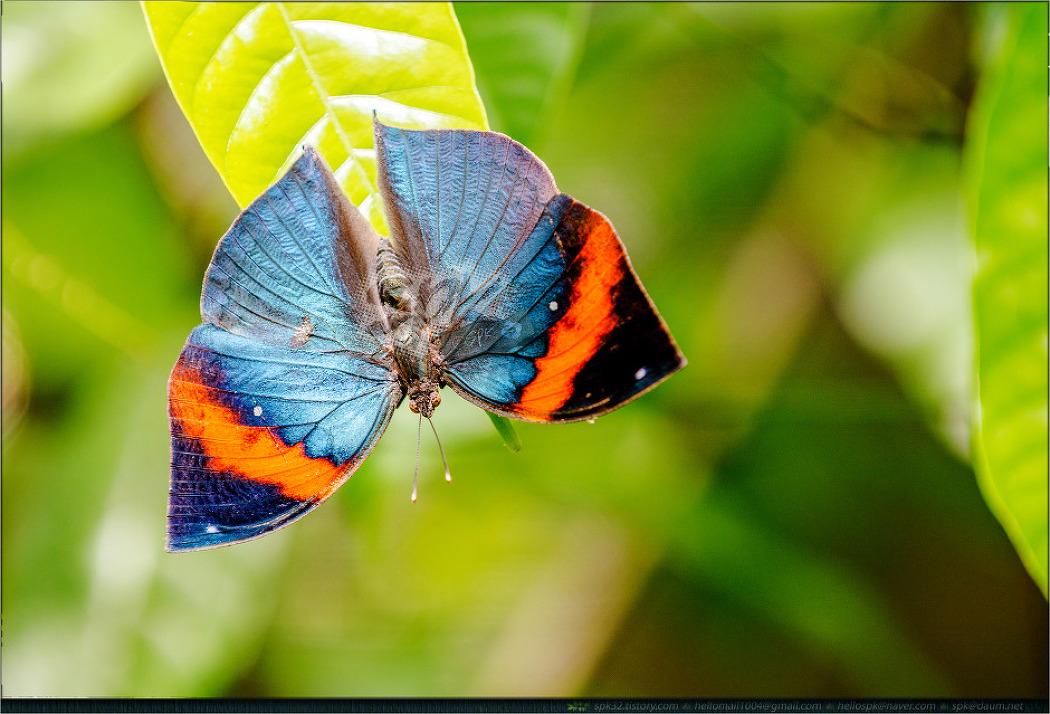 싱가포르 동물원에서 만난 나비