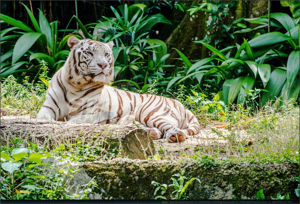 싱가포르 동물원에서 만난... (5)