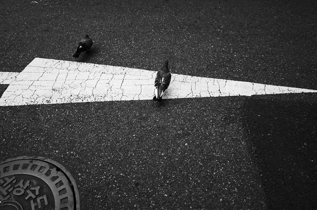 유유자적 닭둘기