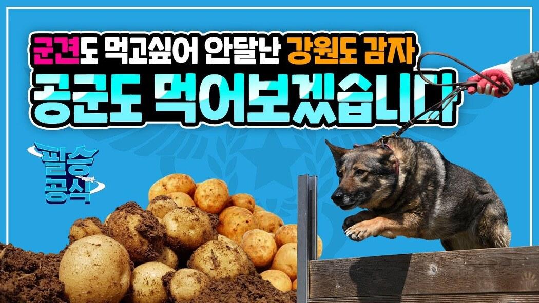 요즘 핫한 강원도 감자 공군이 챙겨갑니다~! [..