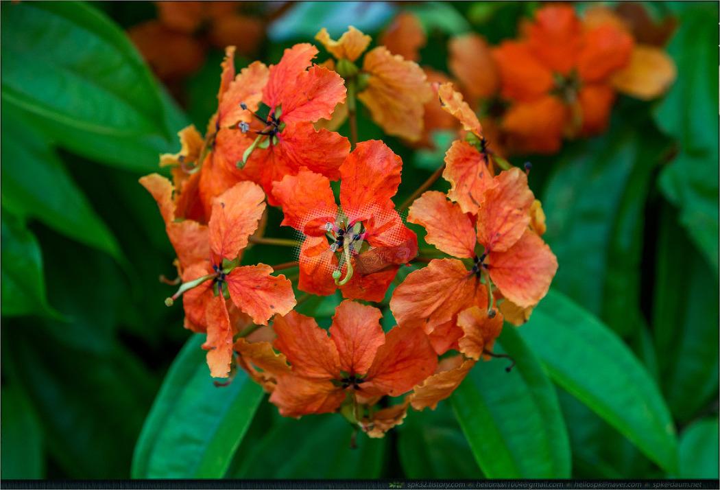 싱가포르 - 꽃 (2)