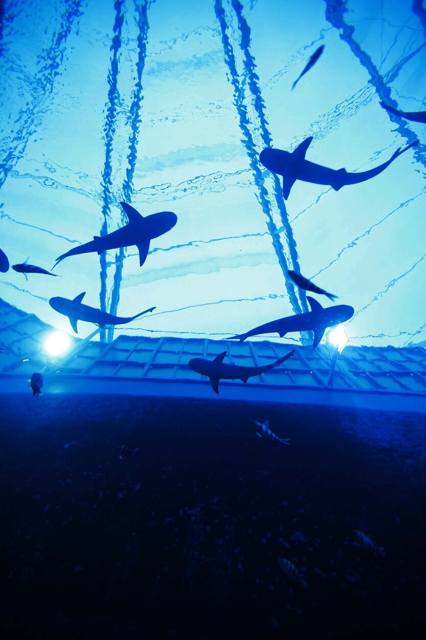 싱가포르 세계 최대 아쿠아리움 (S.E.A. Aquarium)