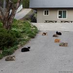 고양이들 (Cats)
