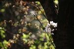 따듯한 날씨에 활짝핀 벚꽃!
