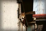 군산고양이...