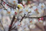 봄 오는 소리
