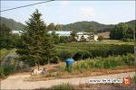 광덕 청산오미자농원 - 오미자