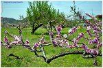 2011.05.05-07 충주 청와농원 (1)