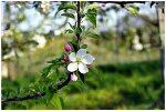 2011.05.05-07 충주 청와농원 (2)