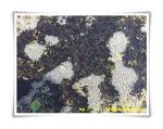 산개구리알 부화기-'개구리알에서 올챙이로'