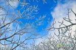 하얀 눈꽃 산호초..