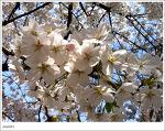 봄꽃으로 화사했던 이번 주말