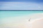 〃에메랄드빛 바다, 여름 캘린더 사진