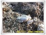청개구리의 동면(冬眠)