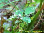 빗방울이 풀잎마다 꽃잎마다 송알송알 맺혔어요.
