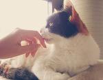 햇살 받는 고양이 사진 :)
