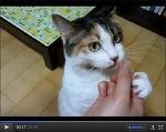 진정한 슈렉 고양이 우리 룬~ 강아지풀은 맛있어요!!
