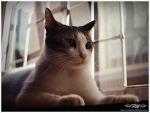 햇살 고양이