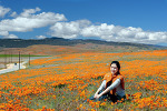 2010년 4월 14일 Wild flower, California Poppy