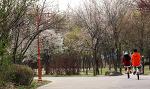 월드컵공원은 벚꽃 비기닝
