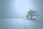 겨울나무...