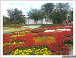[장미축제] 울산대공원 장미계곡
